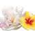 Airwick_Fragrances_1.2_Floral.png