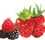 Airwick_Fragrances_1.10_Fruity_A.png